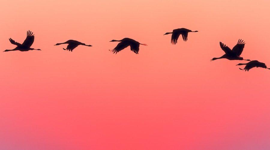 Birds on a row